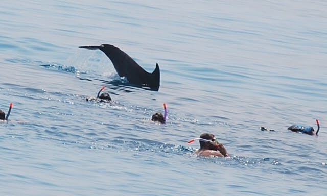 Dolphin Tour for up to 30 person in Red Sea Governorate, Egypt