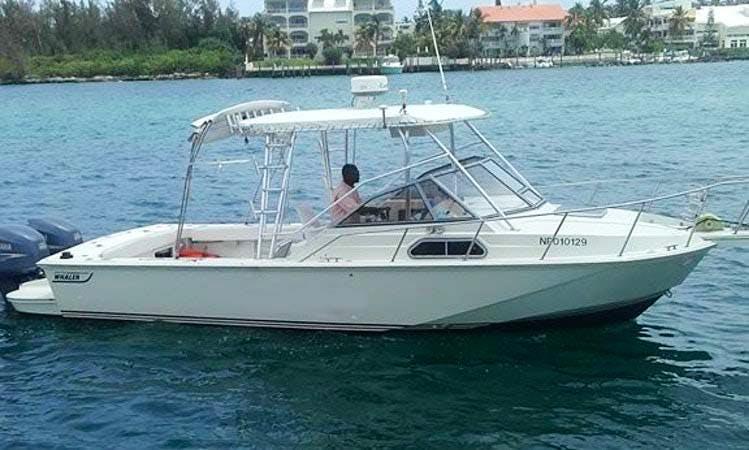 Enjoy Fishing in Nassau, Bahamas on 30' Prince of Tides Cuddy Cabin