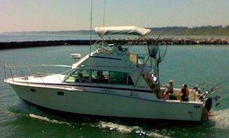 Fishing Charter On 38' Bertram Sports-fishing Yacht In Port Washington, Wisconsin