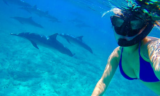Private Ocean Excursions! Wild Dolphin Snorkel & Whale Watching