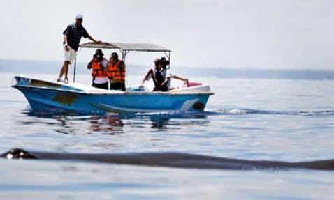 Enjoy a boat rental in Kalpitiya, Sri Lanka