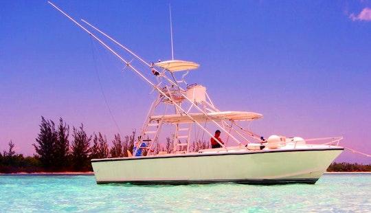 Fishing Charter On 31ft