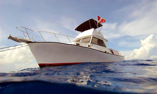 Have An Amazing Experience In A Diving Charter For A Maximum Of 8 Persons In Seven Mile Beach, Cayman Islands