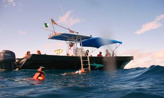 Swim With Whale Shark Tour In Cancún