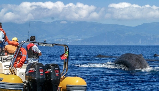 Whale Watching In Vila Franca Do Campo