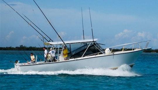 Enjoy Fishing In West Bay, Cayman Islands On 39' Miss Anna Cuddy Cabin
