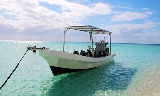 Diving Tours And Padi Courses For Beginners And Expert In Playa Del Carmen, Mexico