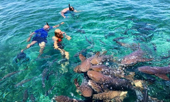 Hol Chan Shark And Ray Alley Tour In Belize City