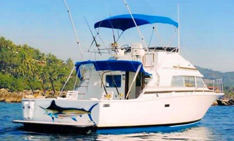 Inshore Offshore Sportfishing Charter