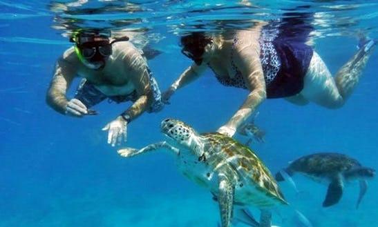 Enjoy Snorkeling Trips In Bridgetown, Barbados