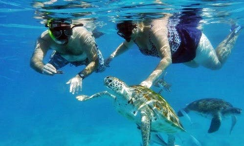 Enjoy Snorkeling Trips in Bridgetown, Barbados