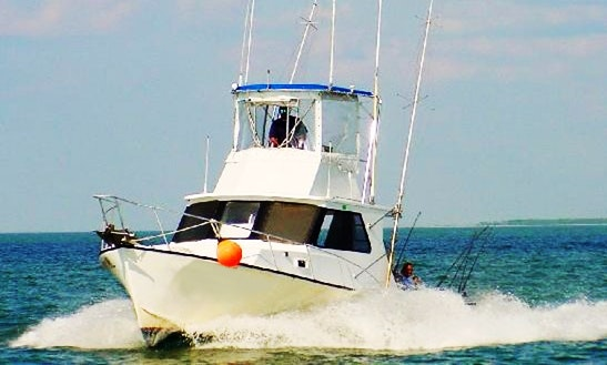 Charter Fishing In Clearwater, Florida With Captain Tom