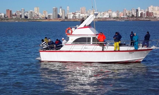 Sport Fisherman Fishing Charter In Mar Del Plata, Argentina