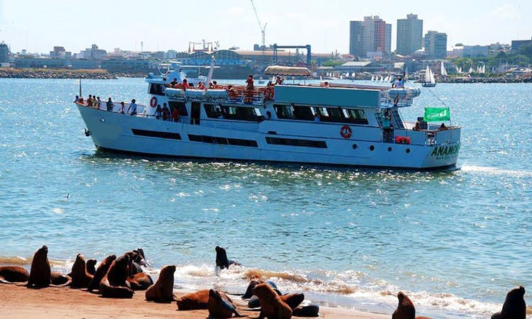Boat Excursions In Mar del Plata