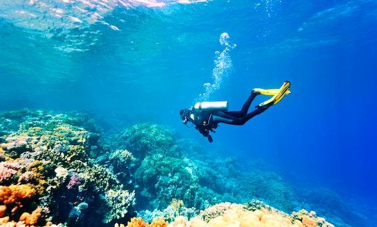 Enjoy Diving In Dhiffushi, Maldives