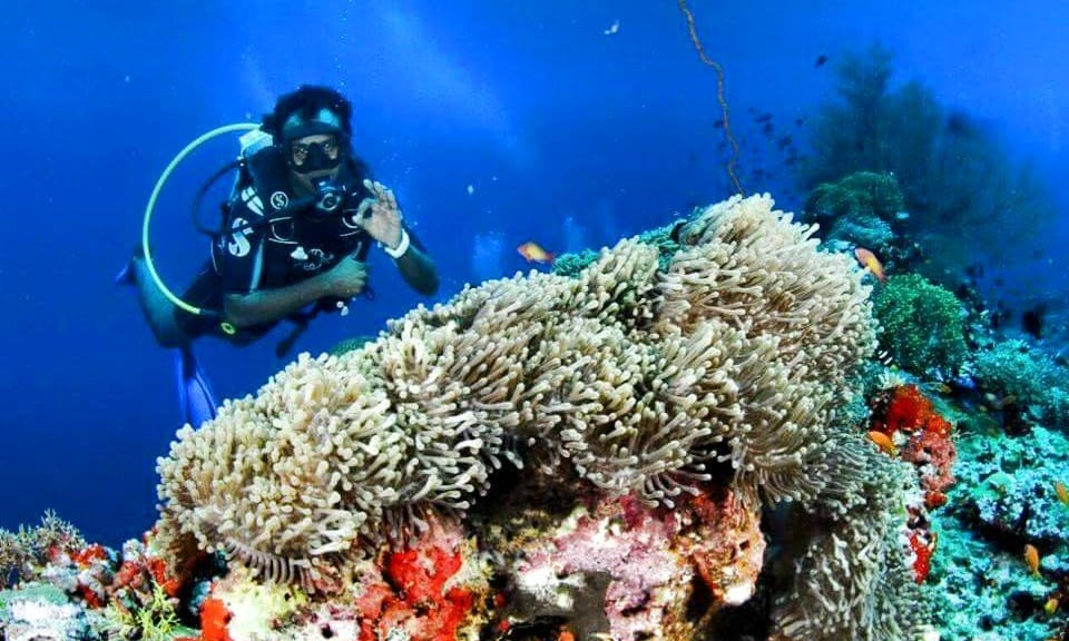Enjoy Diving Trips in Addu City, Maldives