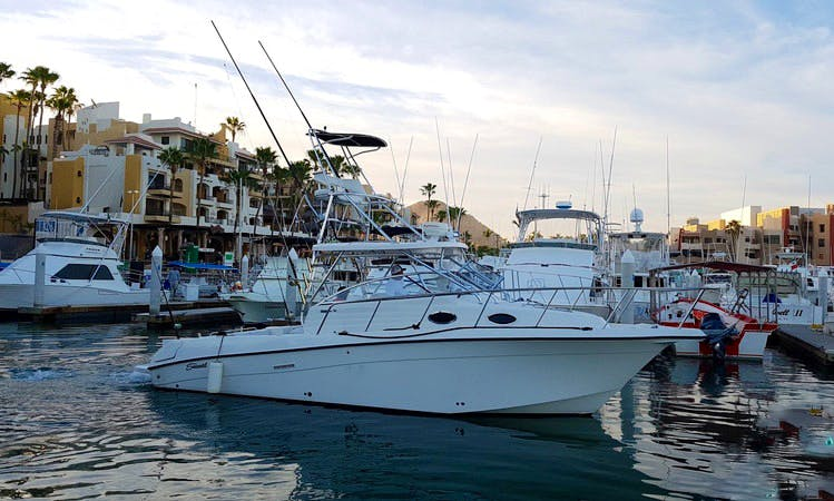 Enjoy a guided boat tour around Cabo San Lucas on a Motor Yacht