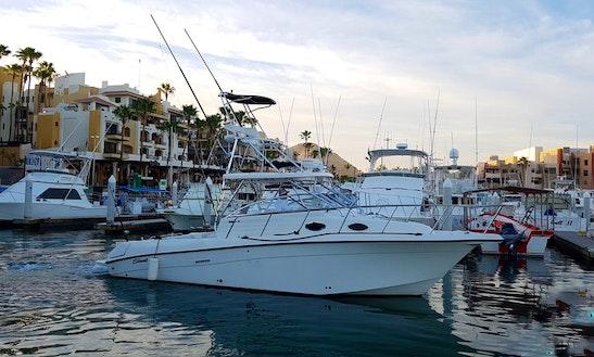 Sport Fisherman Fishing Charter In Cabo San Lucas