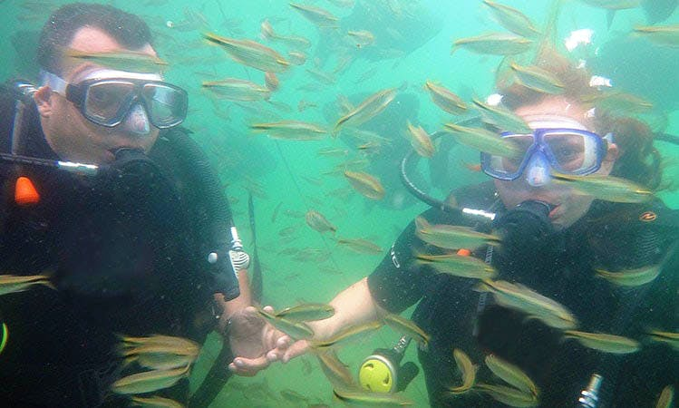 Diving Trips in Bonito, Mato Grosso do Sul