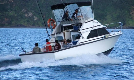 Captained Charter On 28ft Betram In Opua, Bay Of Islands, New Zealand Queensland