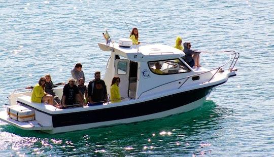 Boat Trips  In Sesimbra, Portugal