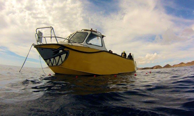 Boat Dives in Corralejo, Spain