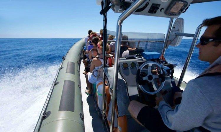 """""""Stenella"""" whale watching trip"""