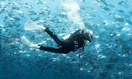 Scuba Diving And Snorkeling In Purmerend