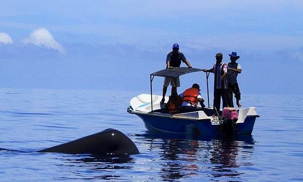 Private Boat - Dolphin & Whale Watching in Ilanthadiya, Sri Lanka