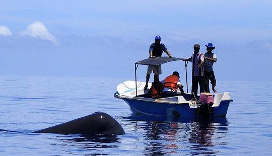 Private Boat - Dolphin & Whale Watching In Ilanthadiya, Sri Lanka