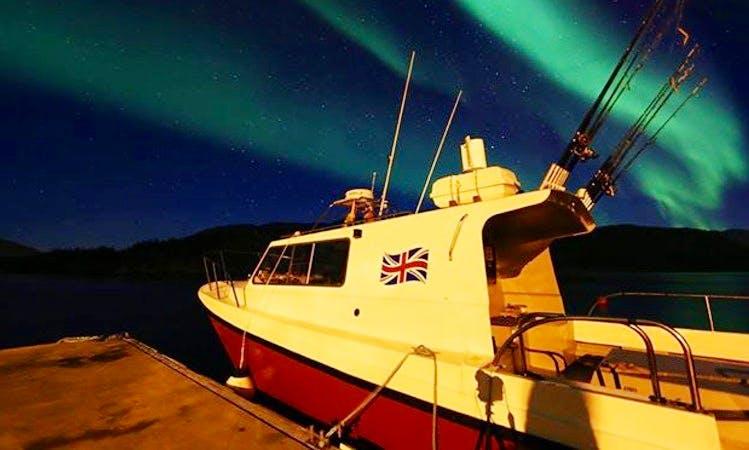 Whale Watching in Sjøtunvegen