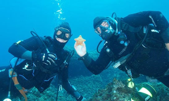 Enjoy Scuba Diving In Dubrovnik, Croatia