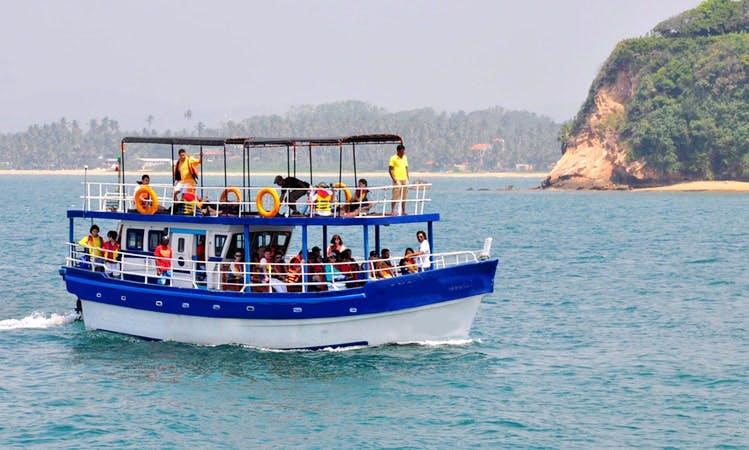 Whale & Dolphin Watching Boat Trips in Sri Lanka