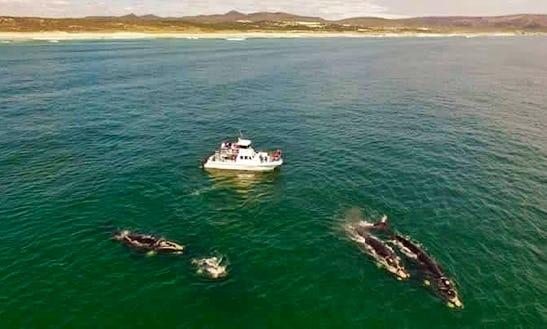 See Southern Right Whales In Hermanus, Gansbaai