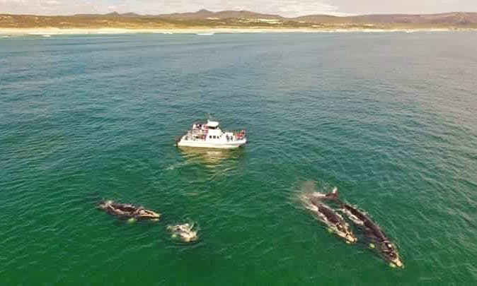 See Southern Right Whales in Hermanus, Gansbaai