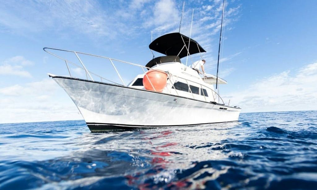 "Enjoy 36' ""LIA C"" Luhrs Sportfisher Charter in Haleiwa, Hawaii"
