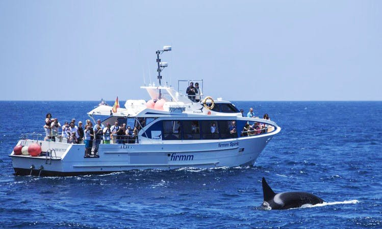 Passenger Boat Rental in Tarifa