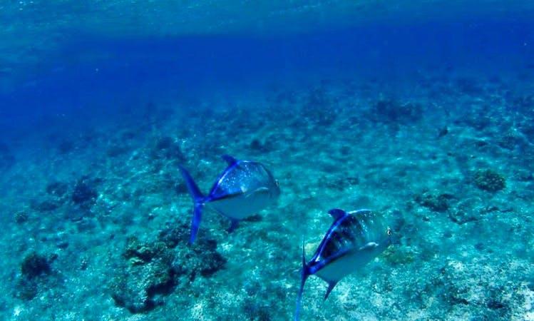 Snorkel Cruising in Nadi, Fiji