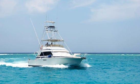 Aruba Deep Sea Fishing Charter On 54 Bertram Fishing Boat With Capt. Peter