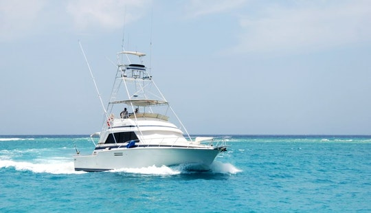 Aruba Deep Sea Fishing Charter On 54 Bertram Fishing Boat With Capt. Peter