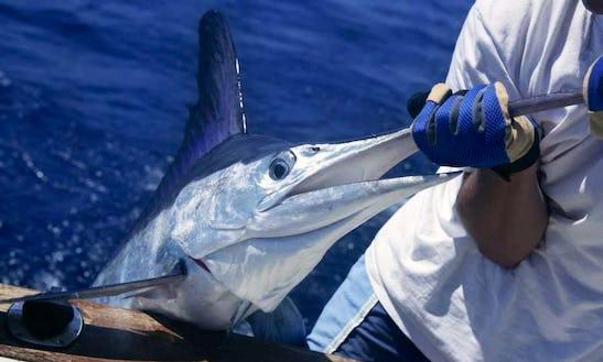 Deep Sea Fishing Trip With Talented Crew In Sosúa, Dominican Republic
