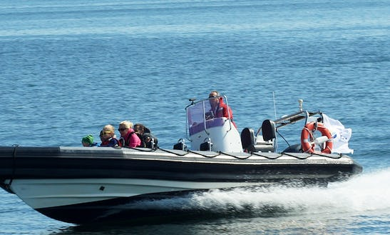 Rib Motorboat For Rent With Skipper In Gdynia | 3city | Poland