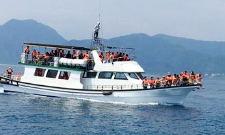 Thrilling Dolphin Tour in Hualien City, Taiwan