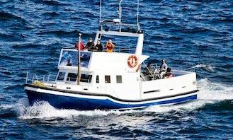 42' Tour Boat In St. John's