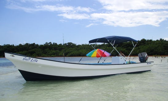 Private Barrier Reef Snorkel Tours For 6 Guests
