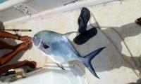 Enjoy Fishing in Ranger Long Island, Bahamas on 16' Ranger Phantom