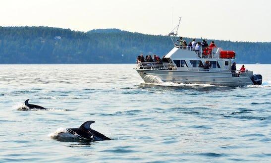 38'  Boat Tour In Eastsound, Washington