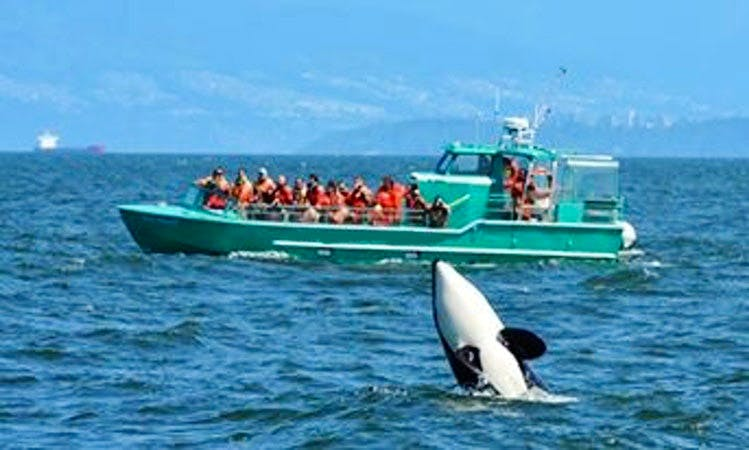 Wild Whales Experience in Vancouver, Canada