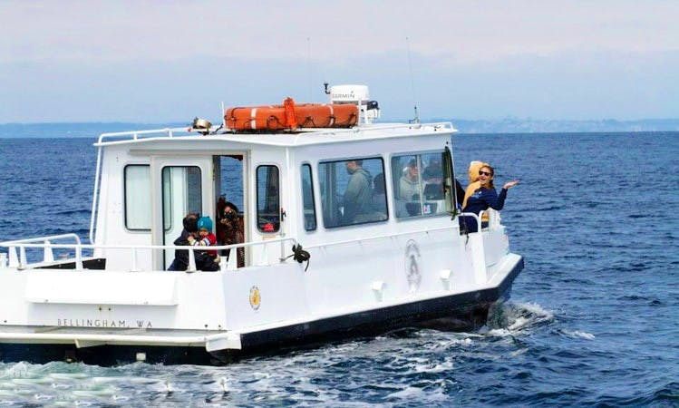 Whale Watching Tours in Eastsound, Washington