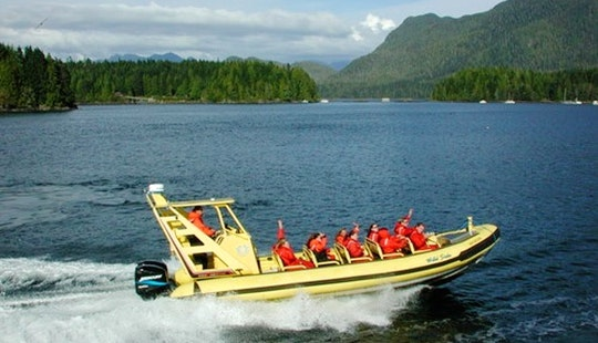 Whale Watching Tour Boat  In Tofino